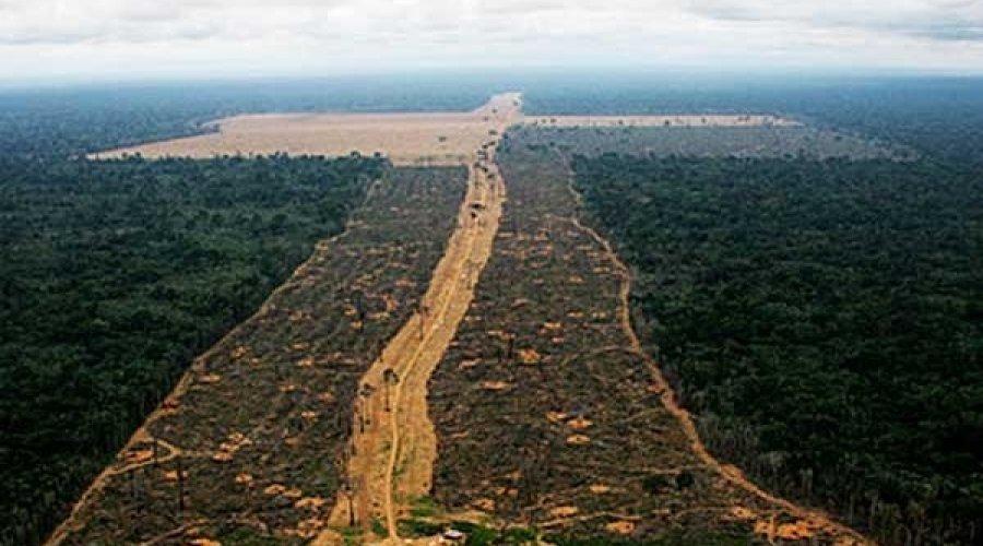 [Desmatamento da Amazônia aumenta 103,7%]